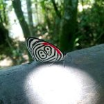 butterfly88