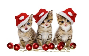 christmas-kittens-holiday-hd-wallpaper-1920x1200-20517