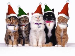 holidaycats